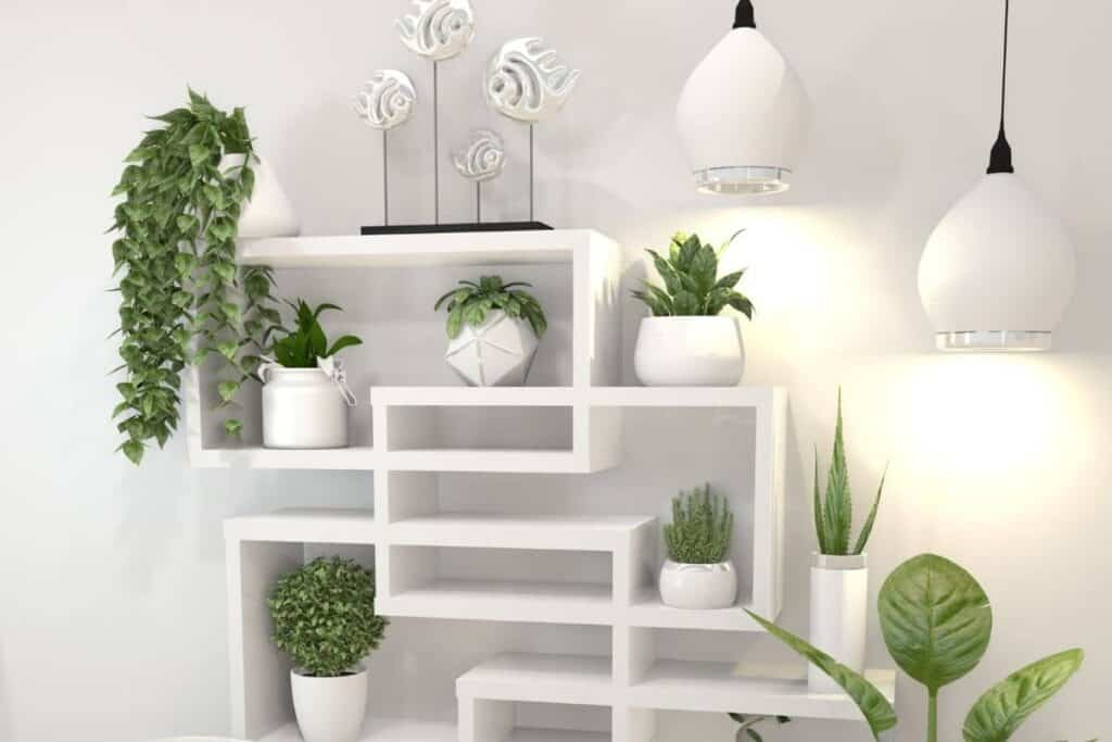 multiple plants on white shelf
