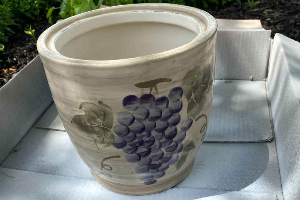 Old planter with purple grapes and green leaves