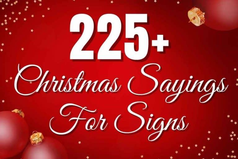225+ Christmas Sayings For Signs – Ultimate List (2021)